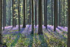 Purple Sanctum